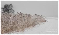 Zima, Obory, śnieg, mgła, krajobraz,
