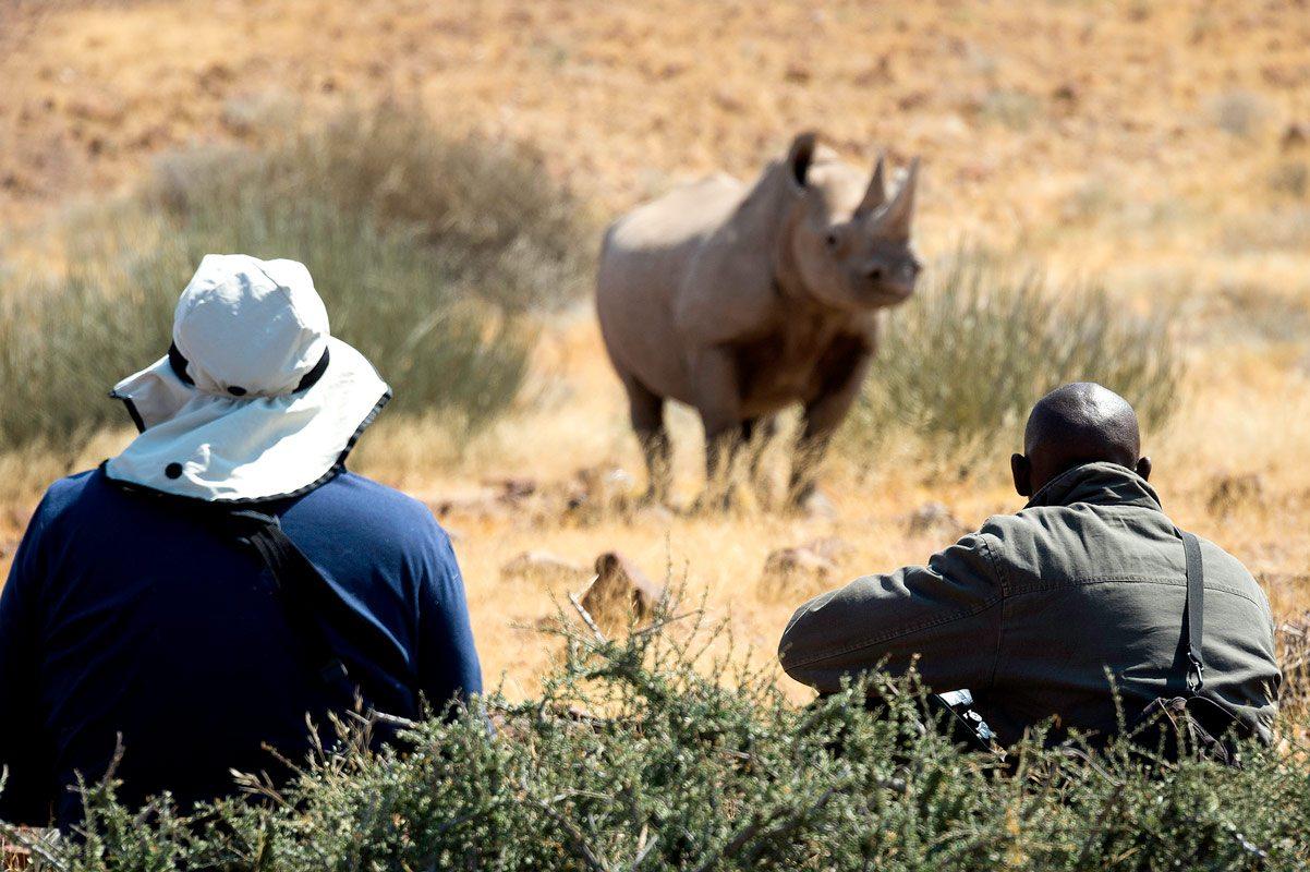 Experience Tracking Desert Black Rhino In Nambia