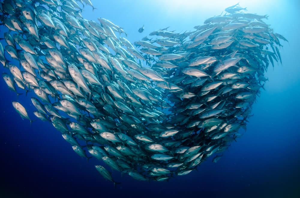 los cabos diving