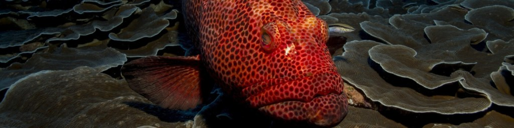 scuba diving lombok