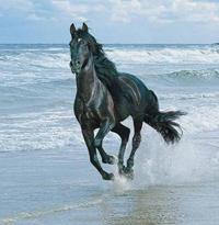 horse-beach-200.jpg