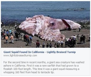 giant-squid-found-in-california