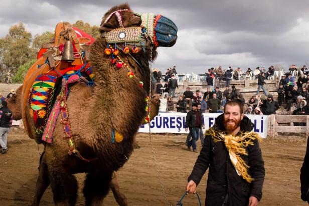 Selçuk Camel Wrestling Blog