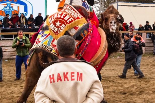 Selçuk Camel Wrestling