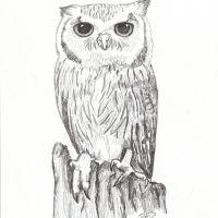 Owl by Rachel Desilets