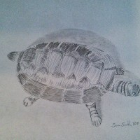 Turtle by Samuel Smith