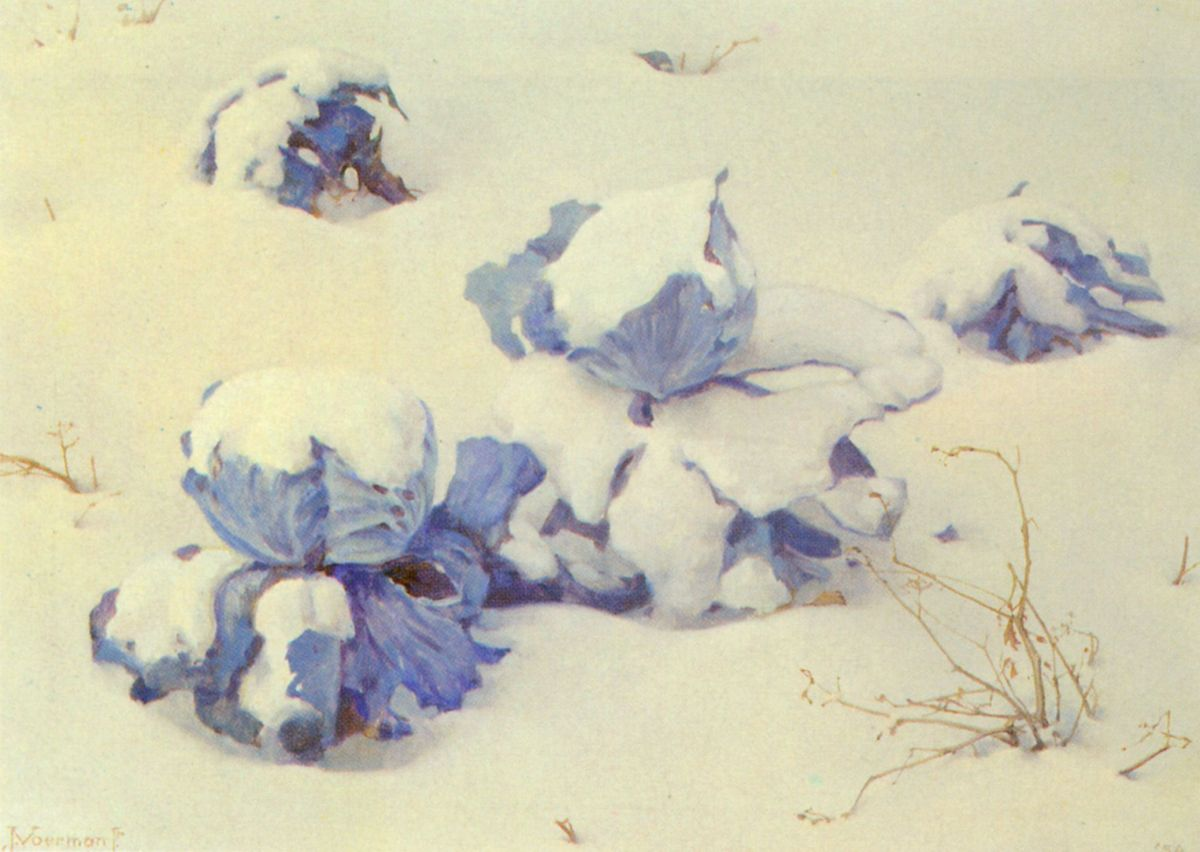 Blue Cabbages in the Snow by Jan Voerman Jr