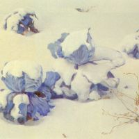 Blue Cabbages in the Snow by Jan Voerman, Jr.