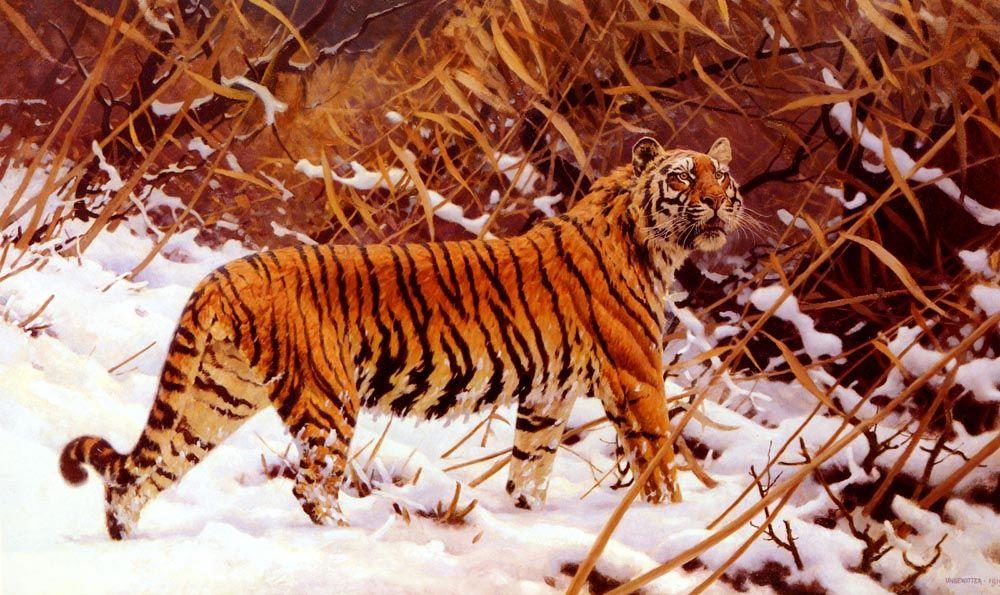 Siberischer Tiger In Einer Schneelandschaft by Hugo Ungewitter
