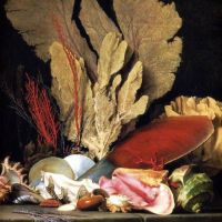 StillLife with Tuft of Marine Plants, Shells and Corals by Anne Vallayer-Coster
