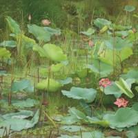 Lotus by Joke Frima