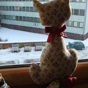 mačička v okne