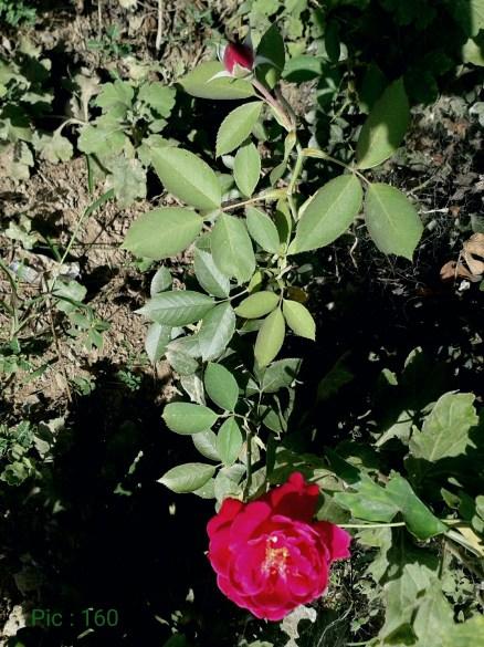 pic-160.JPEG