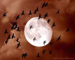 birdsmoon