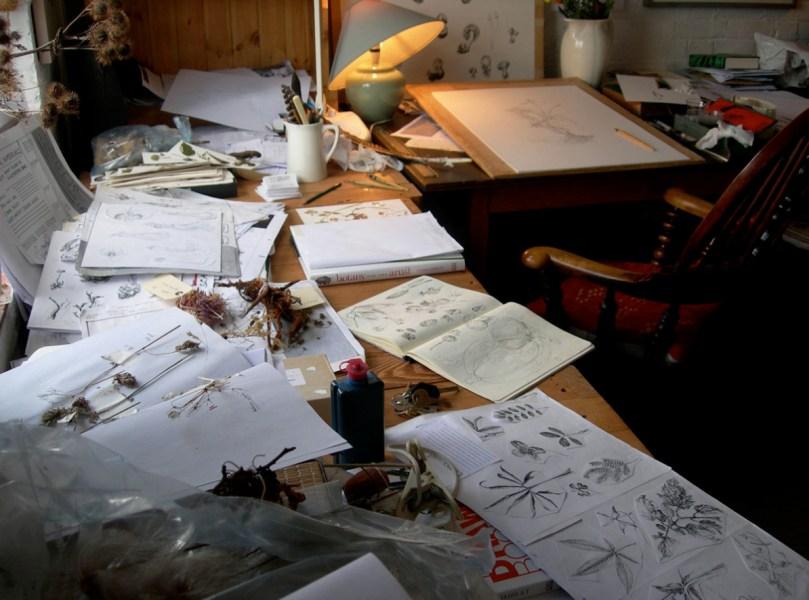artists drawing » Agricshow | Nursery