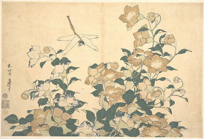 Katsushika Hokusai: Libellule et campanule. Fin des années 1820.