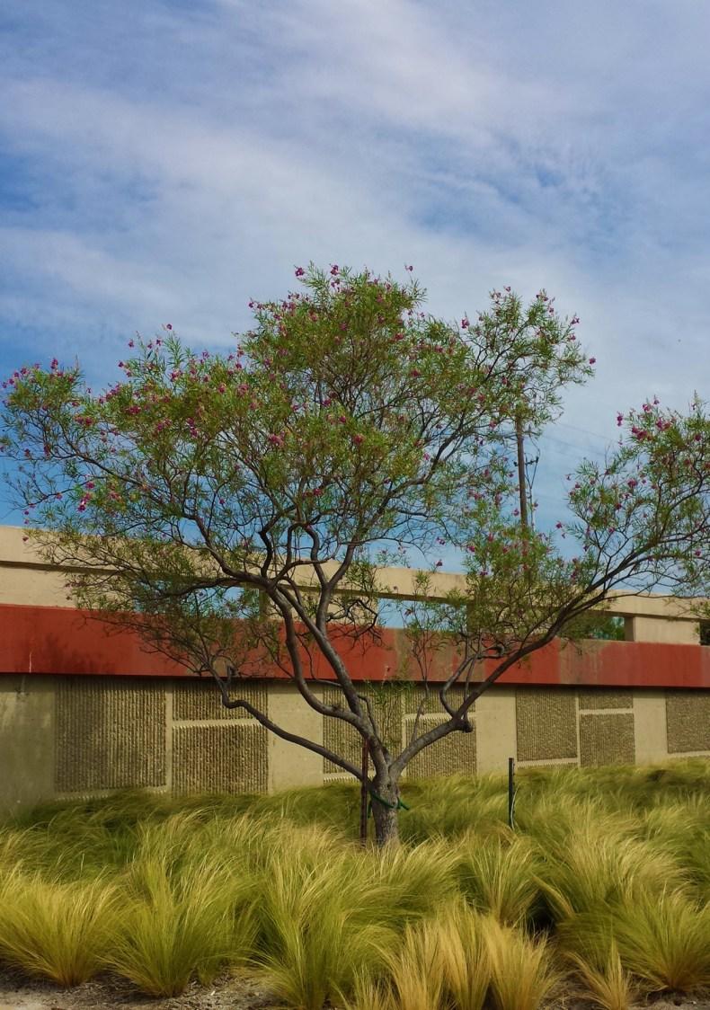 20150801_104832_Brutal-Tree