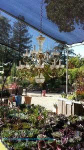Nice outdoor living! - Alden Lane Nursery