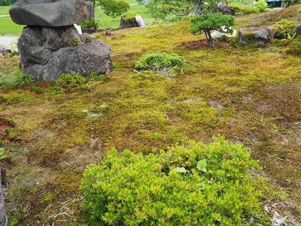 6月のスギゴケの風景写真