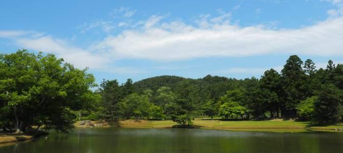 毛越寺大泉が池の初夏の写真