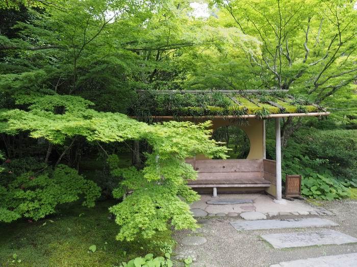 松島円通院の庭園の風景写真
