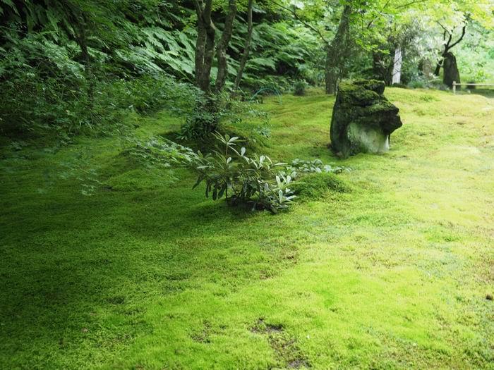 松島円通院の苔の庭の風景写真