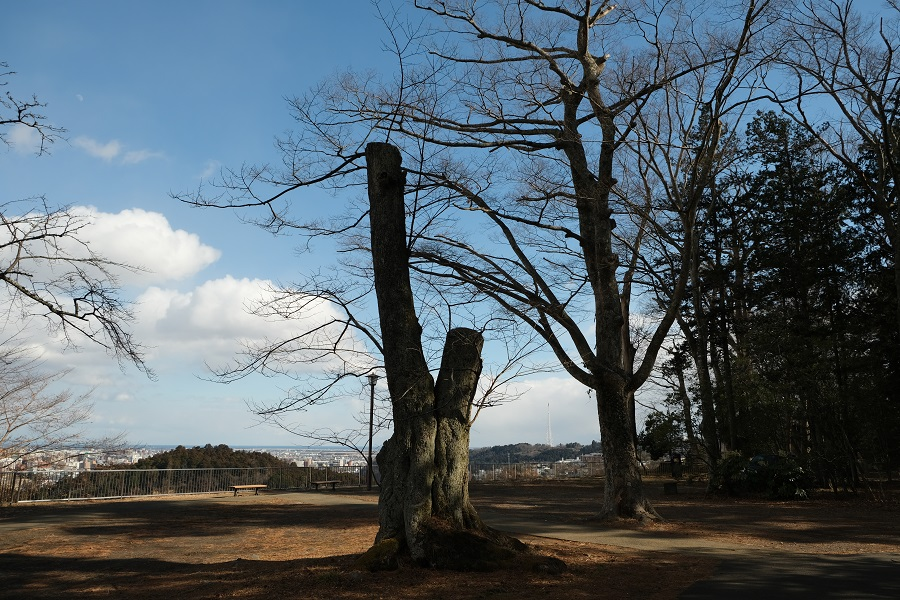 x-t3レビュー画質の評価青葉城址公園(仙台城)の園内の風景写真