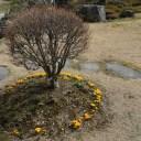 x-t3で撮影画質の評価ポピーの花の風景