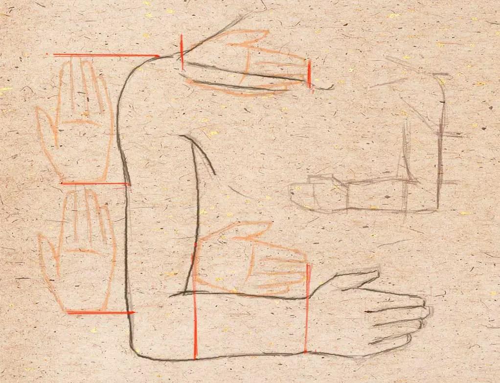 Ihmisen käden mittasuhteet kämmenissä