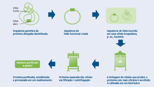 Figura 1. Etapas na produção de um medicamento biológico