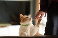 好かれたい!猫がなつくようにする方法や接し方のポイント4選