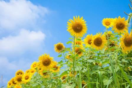 熱中症や脱水症状を防止するために夏に持ち歩くべき基本アイテム7選