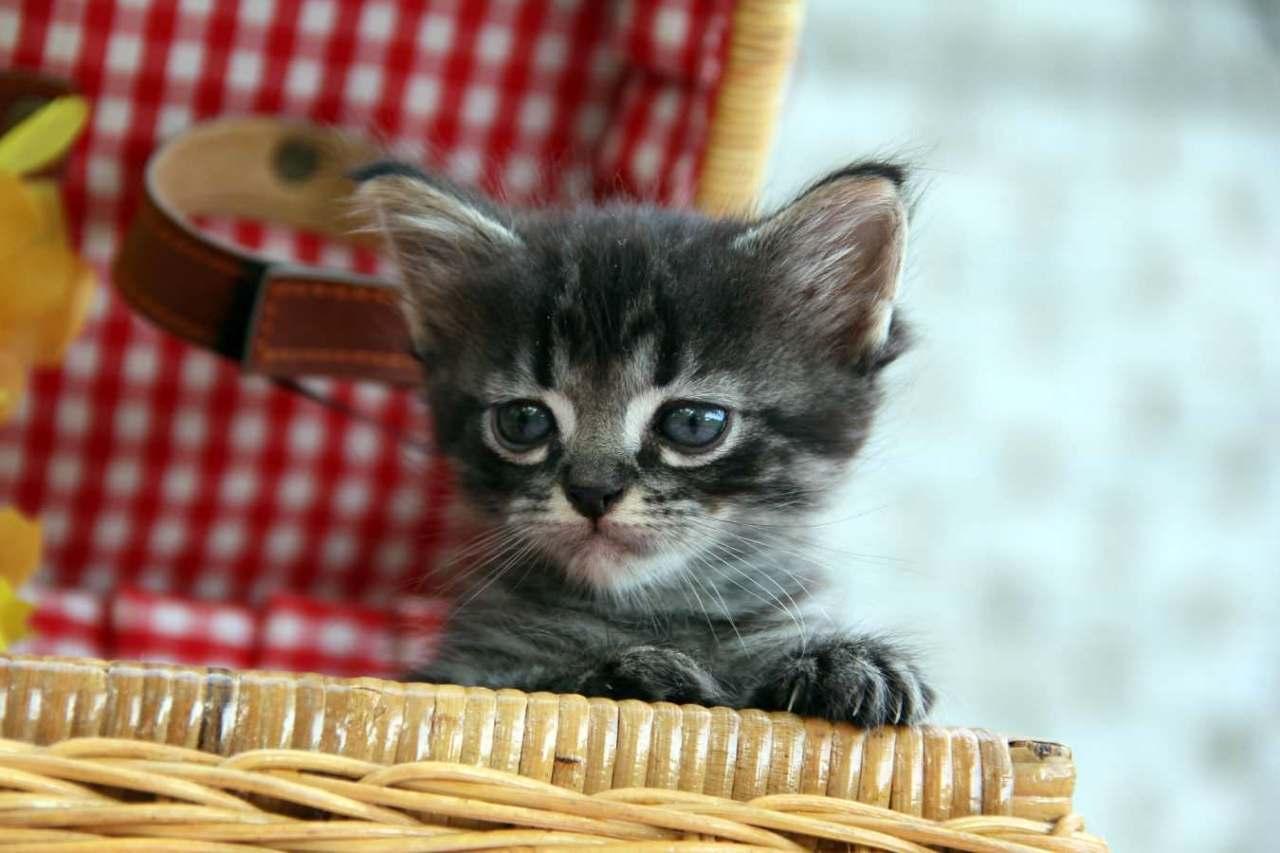 かわいそうだから拾った方が良いのか?捨て猫を見つけた時の対処法3選