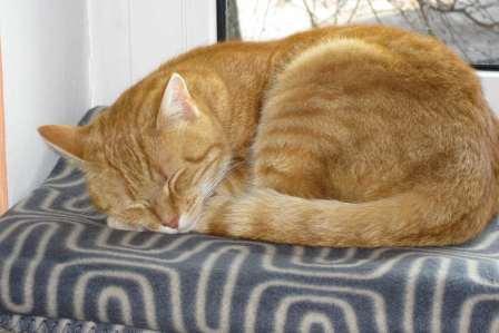 寝ている時に首を痛めない!寝違えるのを防止するための対策方法4選