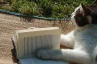 理解が深まる!読み終わった本をもう一度読むことによる4つのメリット