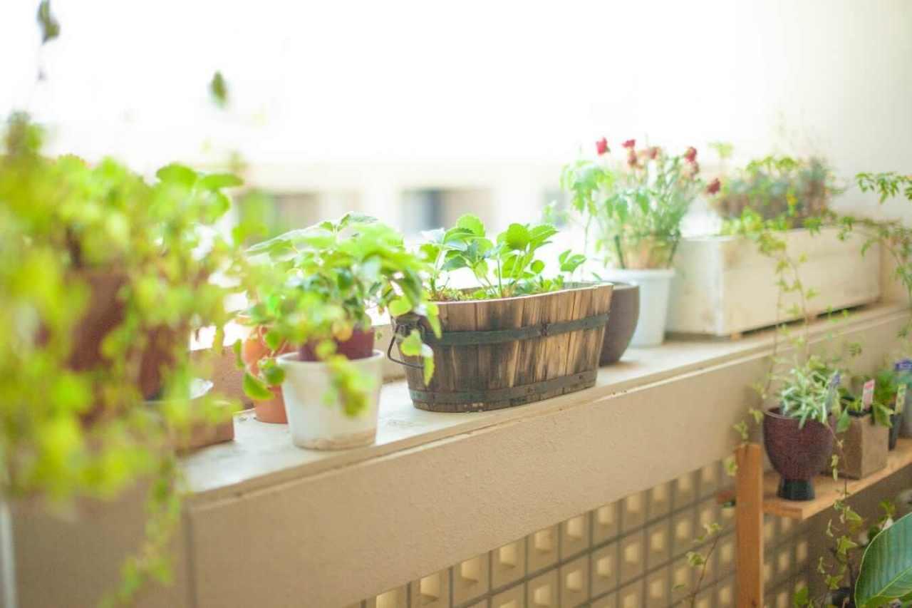 インテリアとしておしゃれだけれども…観葉植物の欠点やデメリット4選