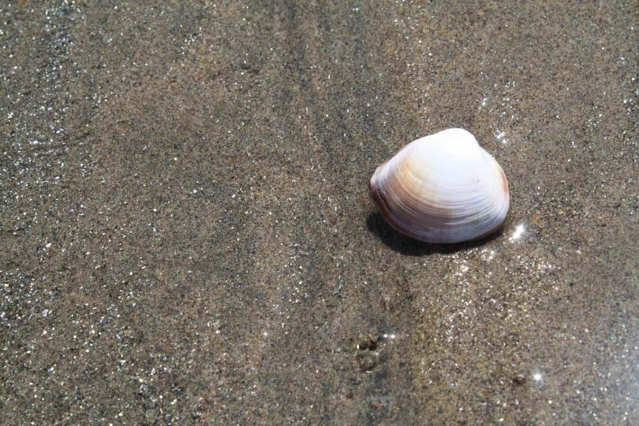 初心者必見!潮干狩りでのアサリとマテ貝の上手な獲り方のコツまとめ