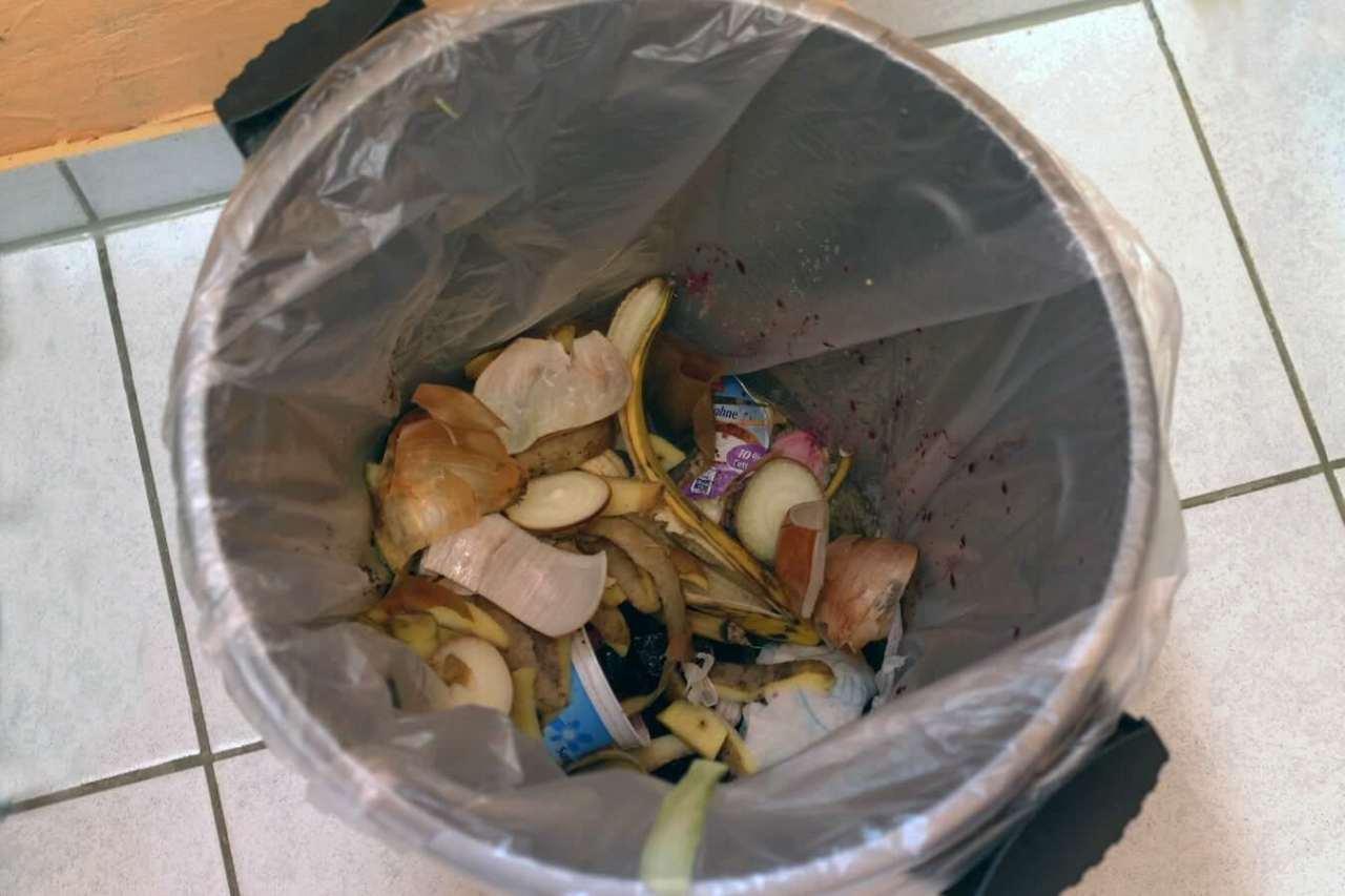 夏場は要注意!ごみ箱や生ごみのうじ虫・コバエの発生を防ぐ対策方法6選