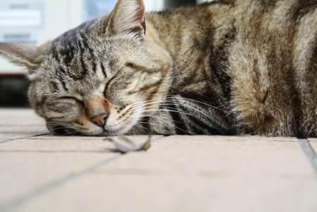 食べた後に眠くなるのを防ぐ!食後の眠気を予防するための対策方法5選