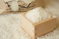洗えば食べれるの!?お米に虫が湧いたときの対処法5選