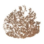 Beth Galston (Sculpture/Installation/New Genres Fellow '13), from the LEAF PRINT series.