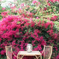 Design by Anna Hackathorn, bamboo chairs, bougainvillea