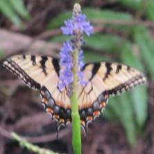 15 butterfly