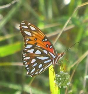 5 butterfly