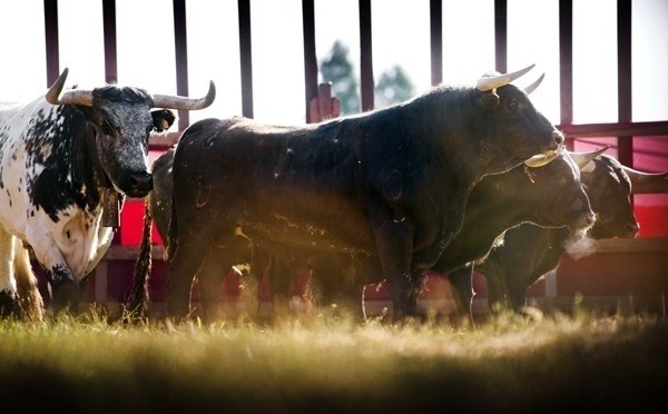 Beat the bull! New thrilling 360° film, The Chase