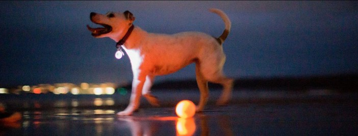Dancing dogs | Dog Ballet to illuminate Torquay
