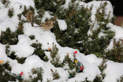 Christmas Bird Count © Lance McMillan
