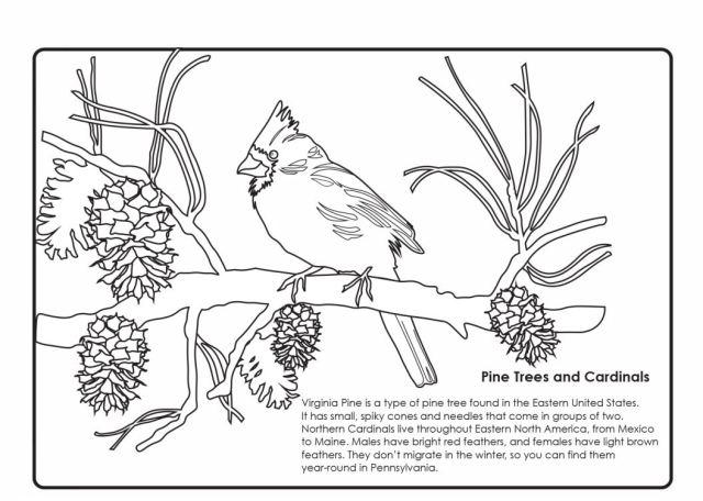 Winter Cardinal Coloring Handout – Art Sphere Inc.