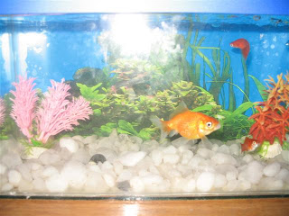 The fishes finally arrived.