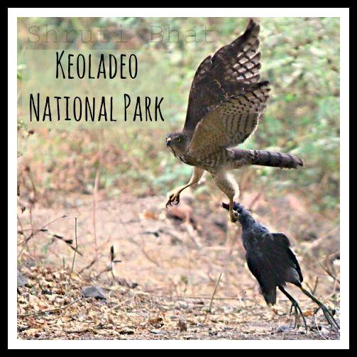 Keoladeo_National_Park